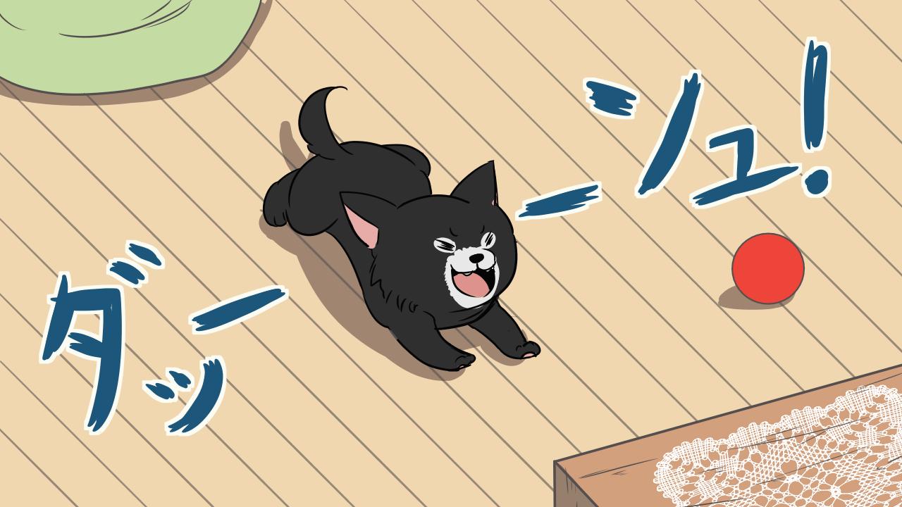 興奮して部屋中犬ダッシュ!シャンプーの後犬ダッシュ!