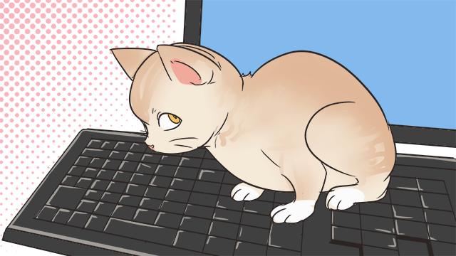 パソコン作業中にキーボードに乗る!