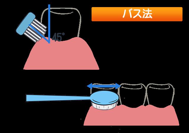 歯の磨き方 ②バス法