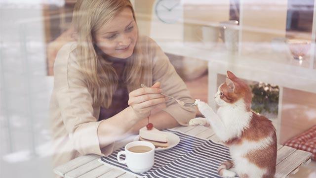 動物系カフェに行ってみる