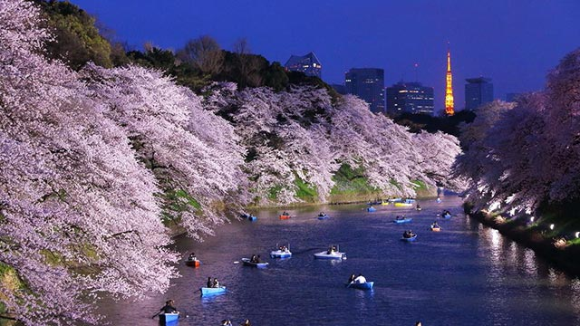 2018年春・夜桜スポットが知りたい♡お仕事帰りに寄られるスポット4選