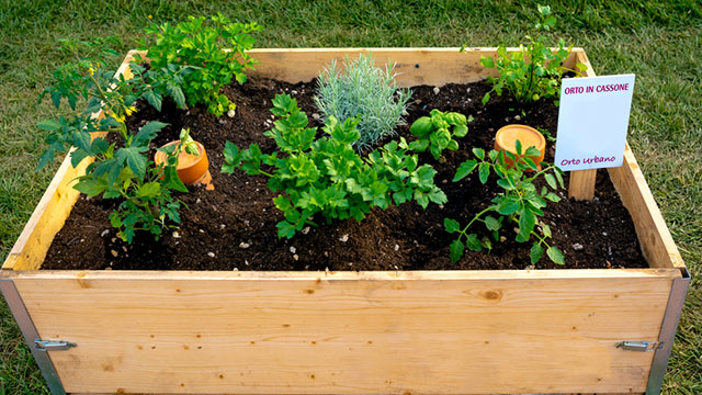 ベランダで家庭菜園してみる?育てやすい野菜3つ