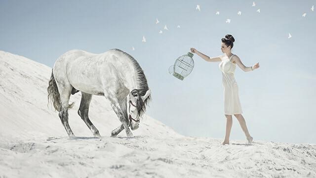 【あなたの願望診断】馬が話しかけてきました