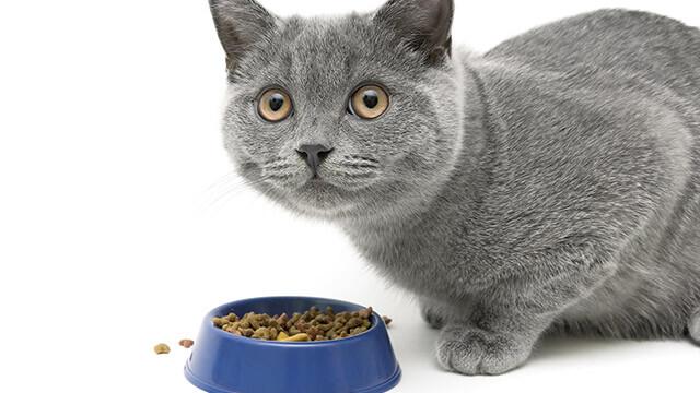 【旅行診断】猫に餌をあげます??