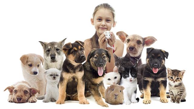 【理想のタイプ診断】あなたが飼ってみたいペットは?