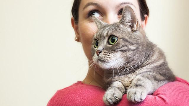 【騙され度診断】雨の日の帰り道、捨て猫を発見!どうする?