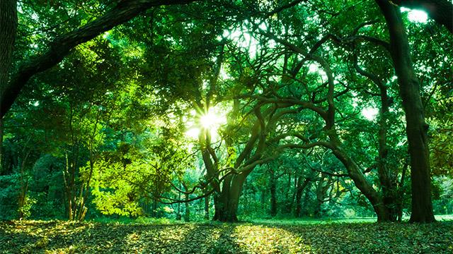 【今の状況診断】あなたは森にいます。森はどんな様子ですか?