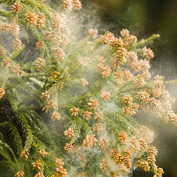 コレをやるだけで花粉対策になる!お家でできる花粉対策