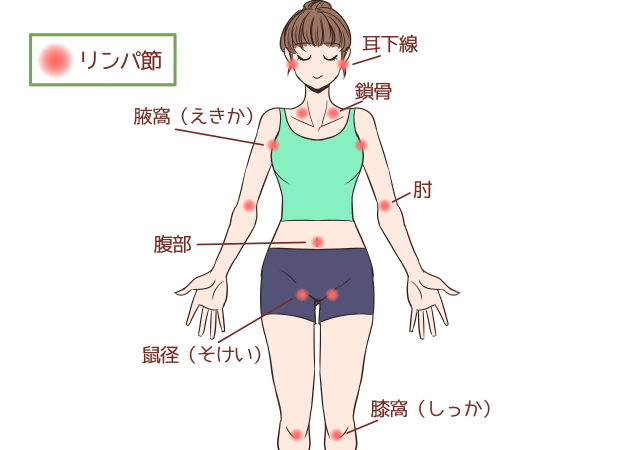 ふくらはぎのリンパ(膝窩リンパ)_1