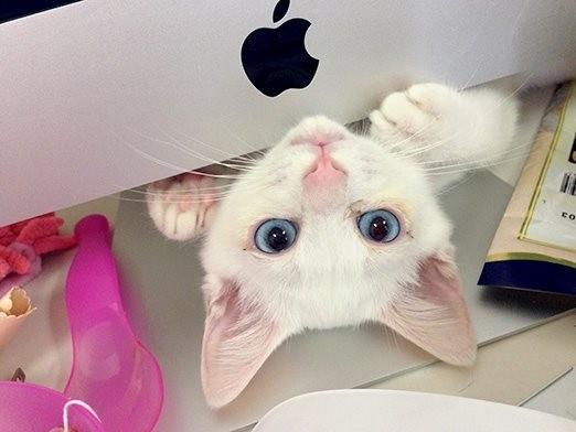 日本一寝顔が酷い絶世の美猫