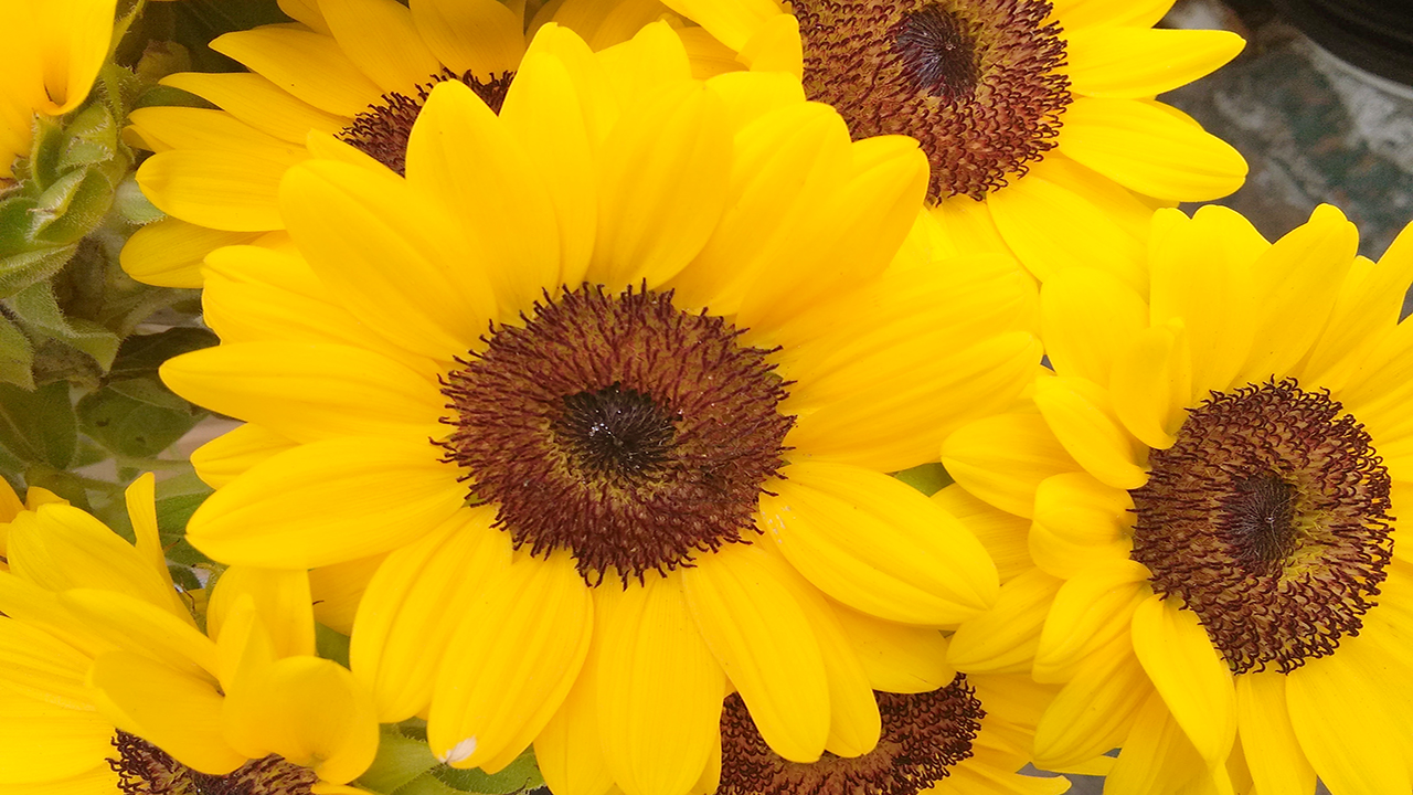 季節感を味わう花々