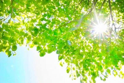 第48回TATTAサタデーラン~新緑の中を走ろう~【目標距離をめざ走】