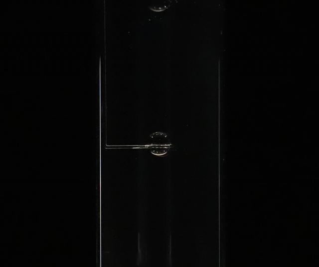 三澤遥の個展