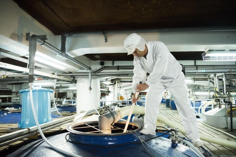 「一麹、二酛、三造り」という製法工程こそが要となる。