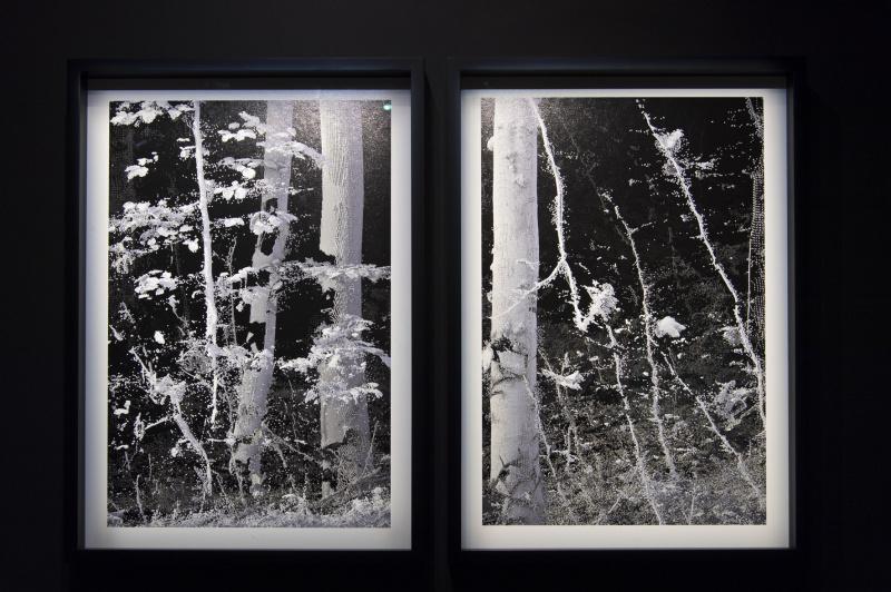 写真のようで写真ではない、データが構築する森の風景。