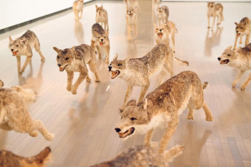 99匹の狼たちが、壁にぶつかり、落ちていく。
