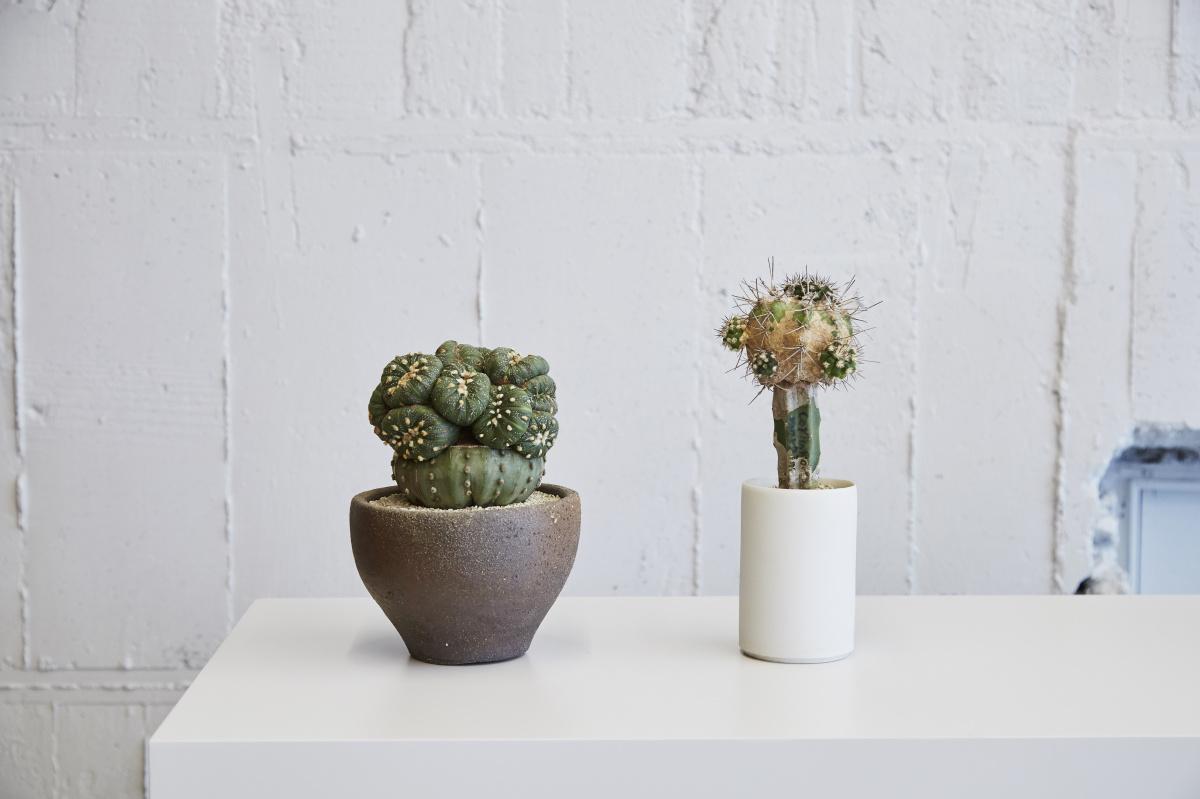 アートピースのようなサボテンと出合える「クサムラ トーキョー」で、特別なひと鉢を探そう。
