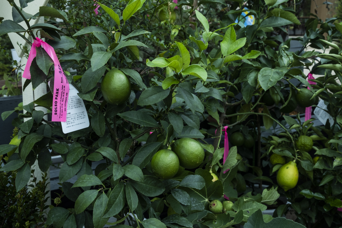 まるでジャングル?! 都会の真ん中、青山にオープンした「ソルソパーク」は、多種多様な植物が揃う貴重なスポット。