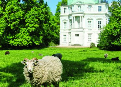 """宮殿専属の庭師として、50頭の""""羊""""が大活躍!"""