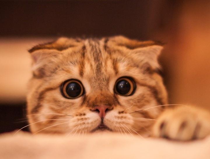 「ホントは、マタタビよりもゴハンよりも人間が好き」――猫より