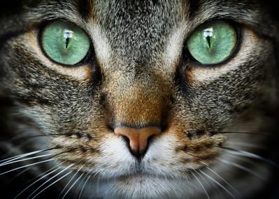 「何か来るにゃ...」大阪地震の瞬間の猫動画に海外が注目 アメリカでは19世紀から軍で研究も