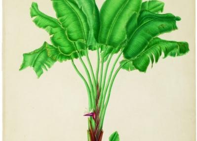 『植物画の黄金時代―英国キュー王立植物園の精華から』展で、美しきボタニカル・アートの世界をのぞいてみよう。