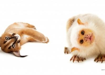 絶滅から動物を守る壮大なプロジェクト『PHOTO ARK 動物の箱舟』が、一冊の本になりました。