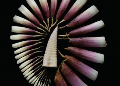 日本ならではの感性で食をひとつの芸術として表現する。緒方慎一郎による著書『喰譜』が美しい!