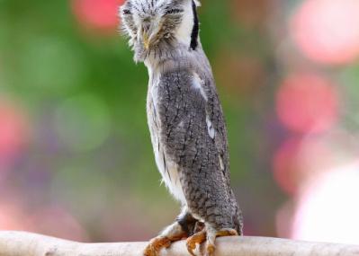 """演技賞もの⁉ サンシャイン水族館で開催中の『化ケモノ展』で、""""擬態""""するスゴい生き物たちに唸りましょう。"""