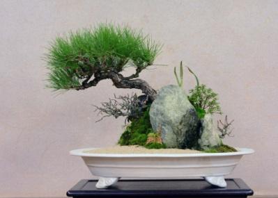 """外国からも注目される""""bonsai""""、老舗「清香園」五代目・山田香織の新作を見に行こう。"""