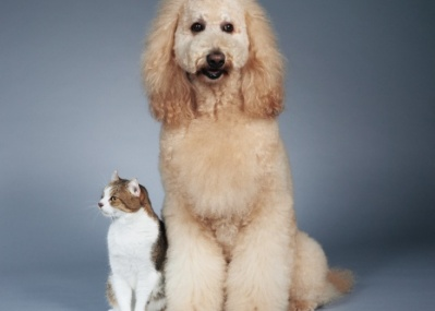 次号「犬と猫」特集、8月16日(土)発売です!