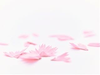 鉛筆を削ると花が咲く!? 日本伝統の花が色鉛筆になりました。