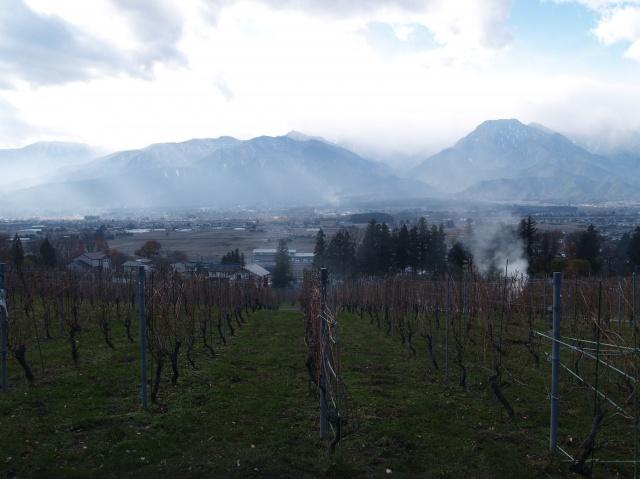 ソーヴィニヨン・ブランらしい爽やかな香りが際立つ、高コスパ・ワイン