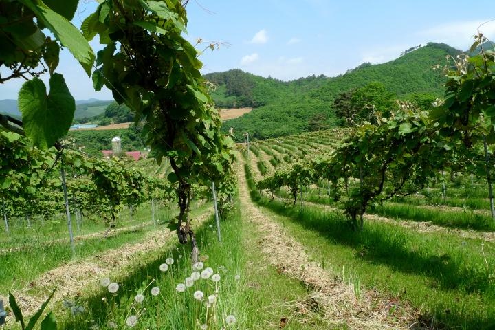 山葡萄のワインの進化系! 樽熟成を経ることでぐんとなめらかな味わいに。