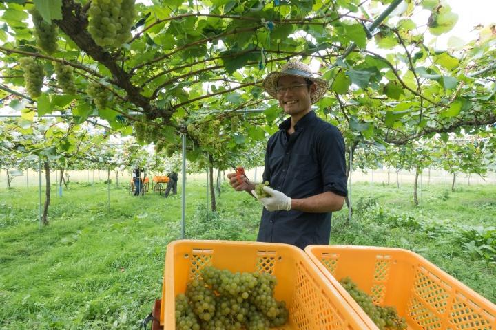 トロピカルフルーツの風味も心地よい、 日本ならではソーヴィニヨン・ブランの味わいを目指して。