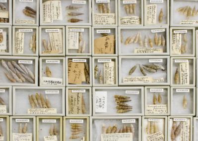 """日本の貝類学の礎を築いた""""貝人""""とは? 240点を超す貝のコレクション展がスゴい!"""