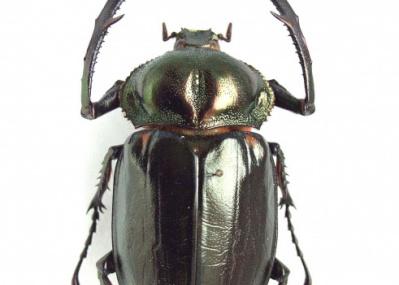 国立科学博物館で開催中の特別展『昆虫』で、夏の日の少年心を呼び覚ましてみませんか?