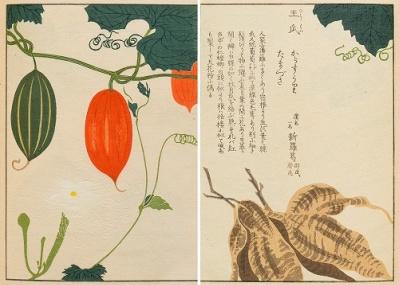 """""""まるでアート""""な植物図譜に隠された、知られざる薬草の物語に出合う。"""