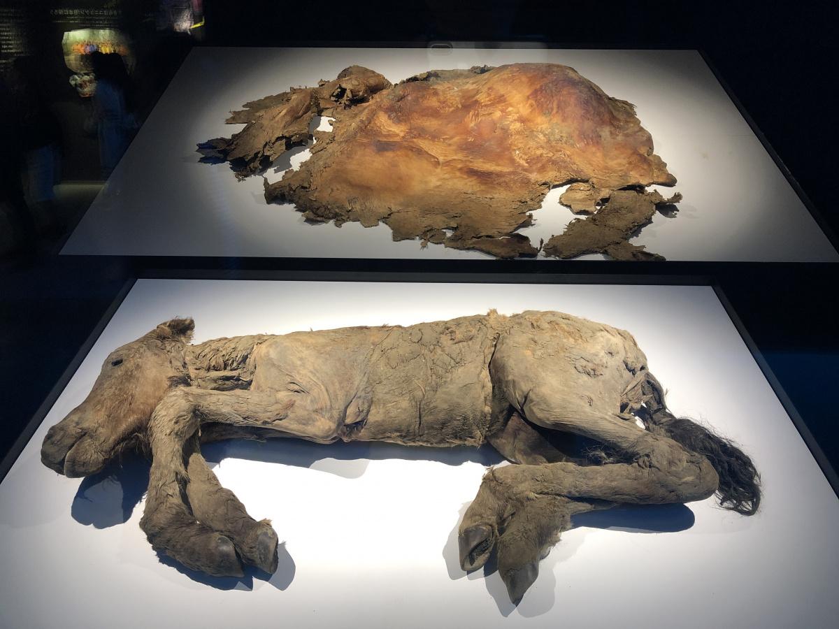 マンモスはいよいよ蘇るのか?! 日本科学未来館『マンモス展』で、その未来を考える。