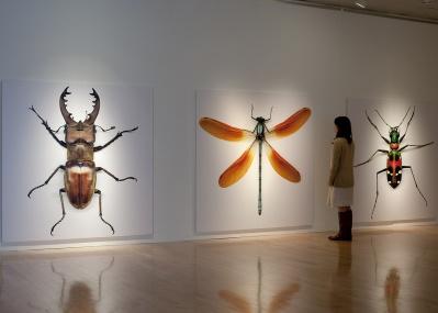 なんだこれ……? 奇妙な標本に刺激され、自然の不思議さを堪能する「自然と美術の標本展」にご注目!
