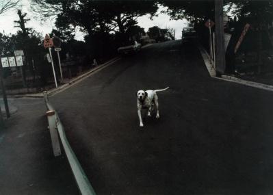 写真家・中平卓馬の知られざる転換期とは? 44年の時を経て再現される大型作品『氾濫』は必見です。