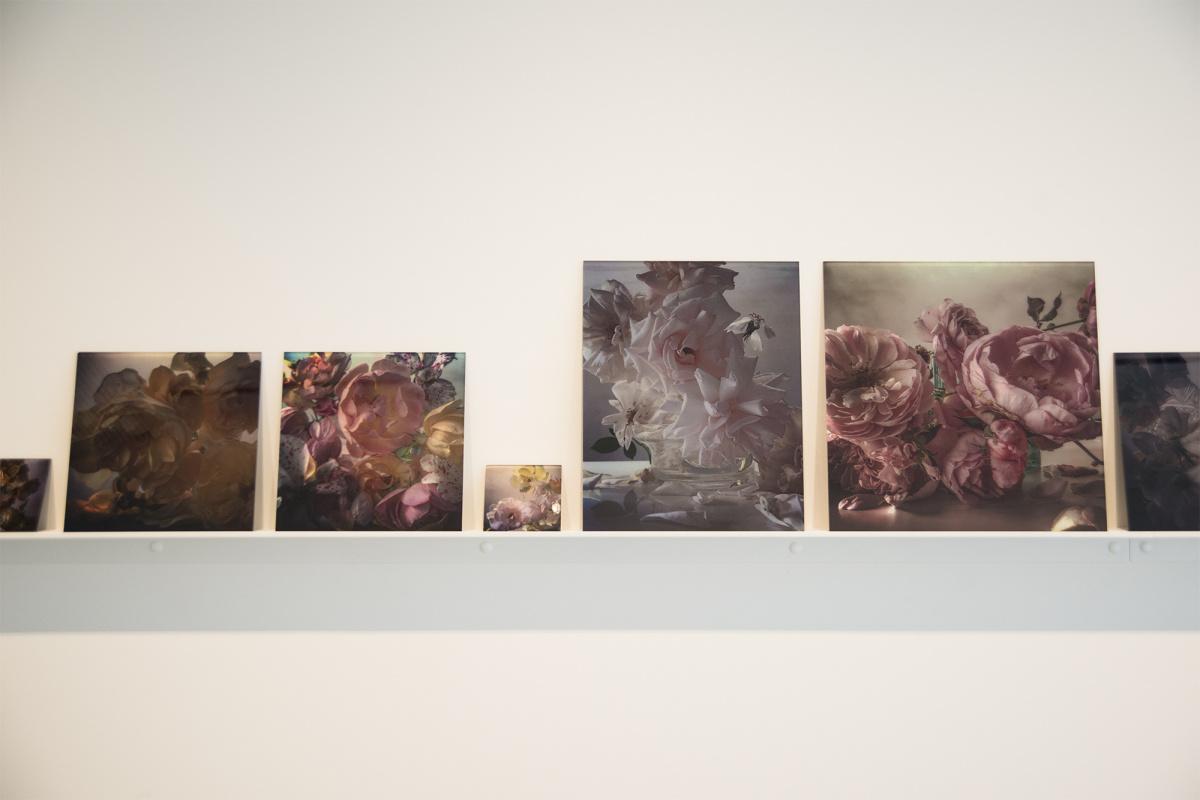 """滴り落ちる美しいバラに注目! ファッション写真を革新し続けるニック・ナイトの日本初個展のテーマは""""植物""""です。"""