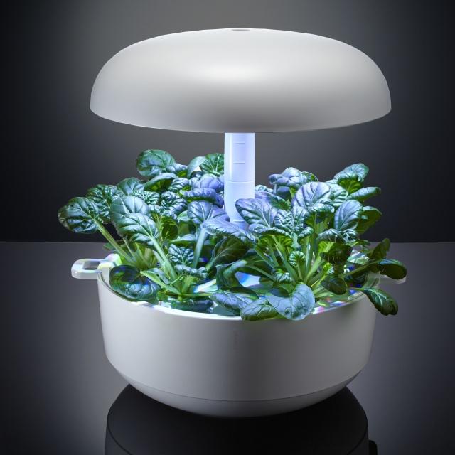葉物野菜が、LEDライトですくすく育つ。