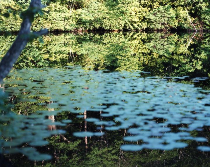 """鈴木理策の展覧会『Water Mirror』で、瑞々しく澄みわたる""""水鏡""""の世界に浸ってみませんか?"""