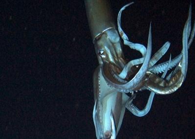 深海に潜む巨大生物に会える! 特別展「深海 2017」で人類最後の未知なる領域へ。