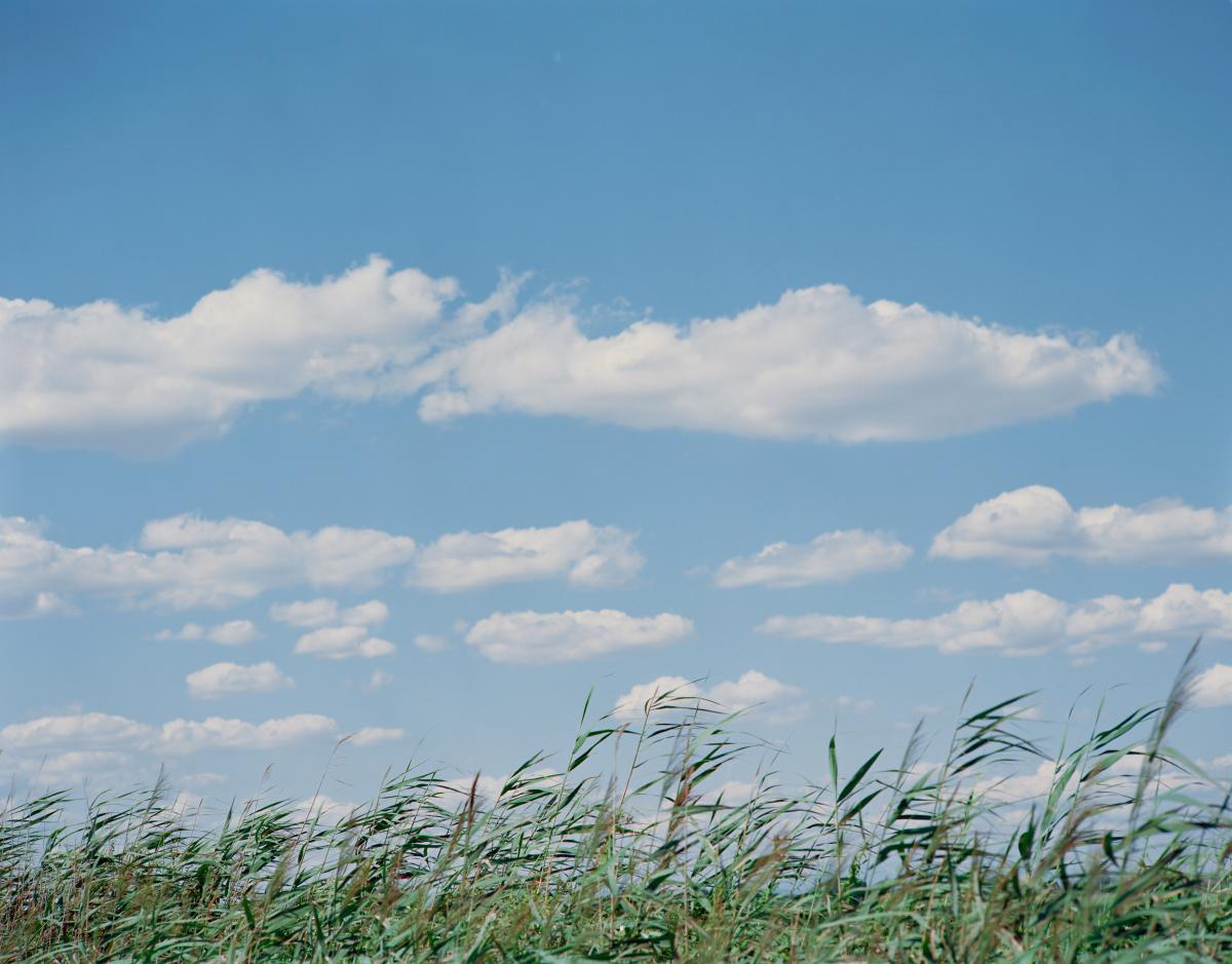 セザンヌやモネの名画が浮かび上がる、写真家・鈴木理策の作品展。