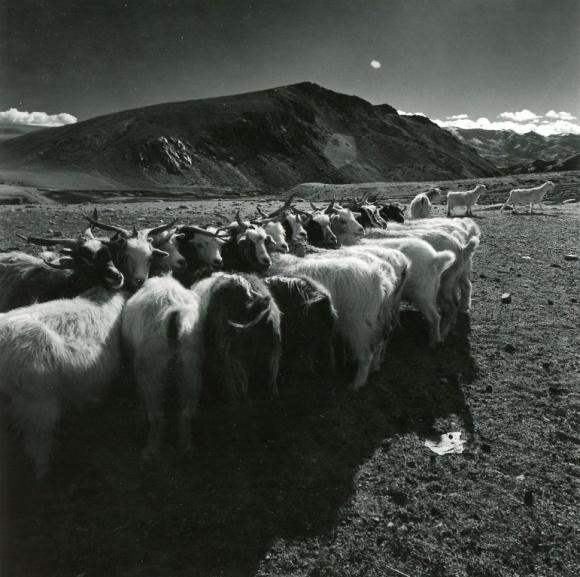 ヒマラヤを望むインド・ラダック地方を旅した、写真家ugaの作品展「空と人」。