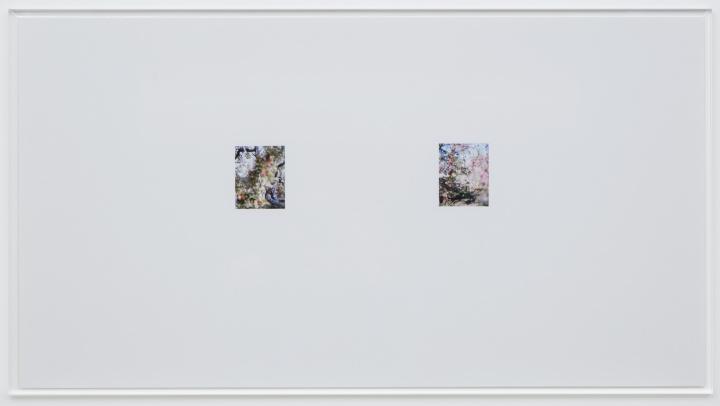 """あえてサイズを""""縮小""""して見えてきたものとは? 写真家・上田義彦さんが新作『林檎の木』を熱く語ります。"""