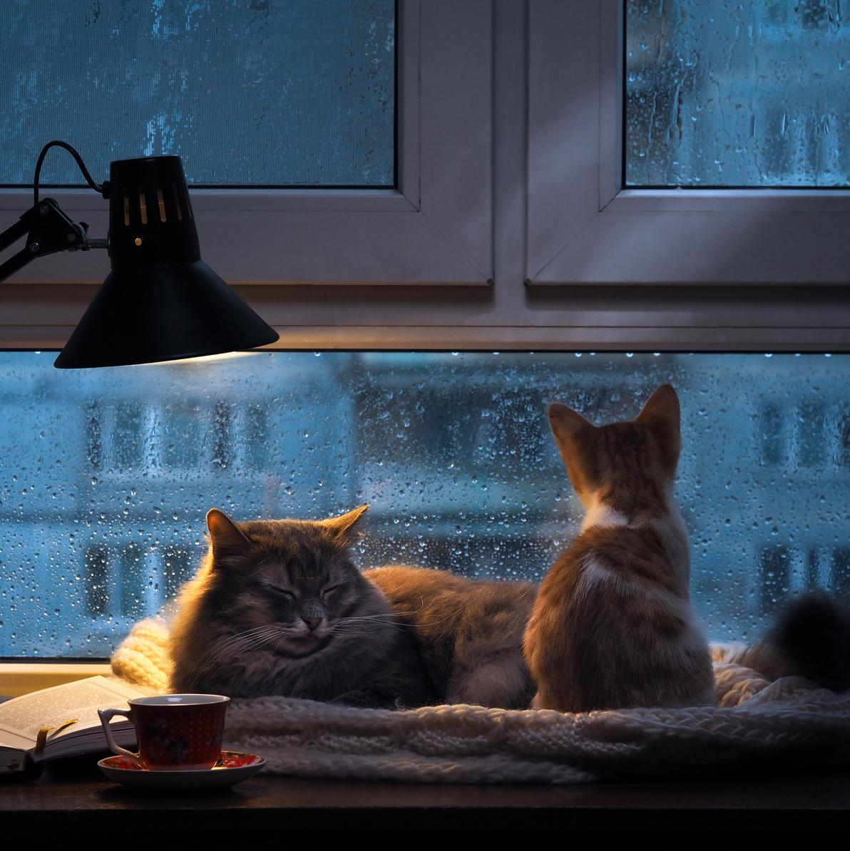 発情 期 いつ 猫