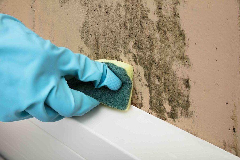 押入れ カビ 掃除方法 Zehitomo ハウスクリーニング
